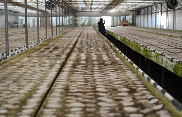 코로나19에 직격탄 맞은 화훼농가